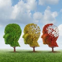 aging_brain_metaphor