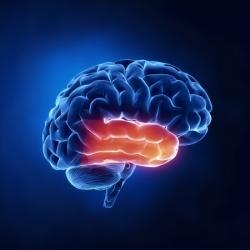 brain_activation