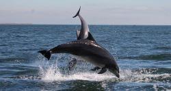 carroll_dolphinjump_img_5027